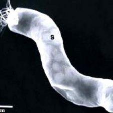 Další důkaz o mimozemském životě