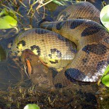 Amazonské hadí obludy