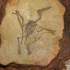 Žijí dodnes pterodactylové? Možná ano!