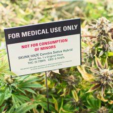 Léčivá marihuana: Proč nemáme znát její blahodárné účinky?