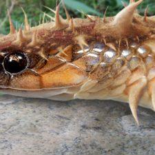 Záhadný létající červ zabíjel na Šumavě. A nejen tam