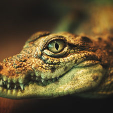 Krokodýlí čarodějové