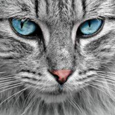 Můžeme skutečně komunikovat se zvířaty telepaticky?