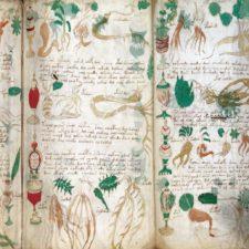 Voynichův rukopis 3x očima vědy. Co už bezpečně víme?