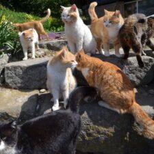 Kočičí ráj na zemi se jmenuje Kypr