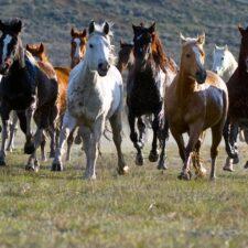 Neurážejte koně, budou si to pamatovat!