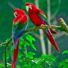 Kolik slov zvládne papoušek? Překvapivá inteligence zvířat a rostlin