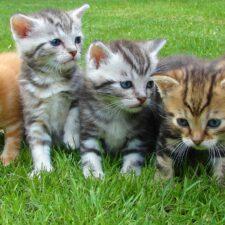 Jak vznikly kočky a kam jdou po smrti